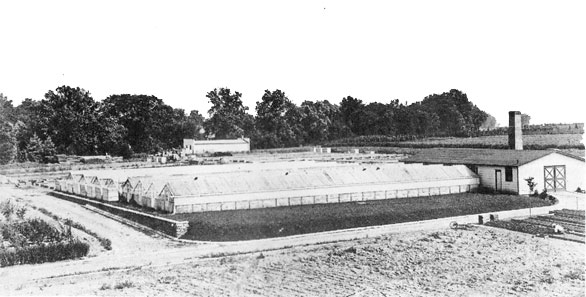 By 1924 When Rose Photographed The Princeton Nurseries Firm S Specialized Facilities Had Already Expanded To Make Possible Nurturing And